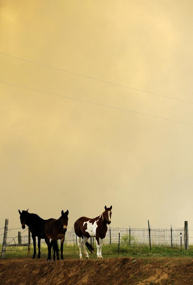 COLORADO SPRINGS, CO - JUNE 12: Horses stand in a pasture as smoke fills the air from the Black Forest Fire June 12, 2013 near Colorado Springs, Colorado. The fire has reportedly burned 80 to 100 homes and has charred at least 8,000 acres. (Photo by Chris Schneider/Getty Images)