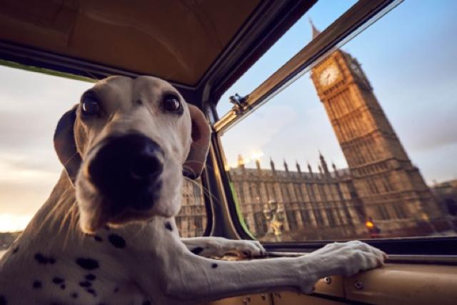 Introducing the world's first city tour bus for dogs!