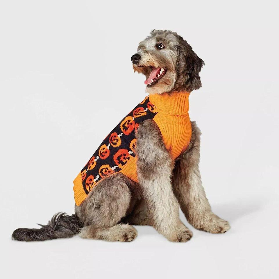 Dog wearing a Stacked Pumpkins Dog Sweater on a white background