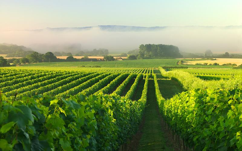 There must be worse ways to earn money than picking grapes - © Charmaine Grieger 2012
