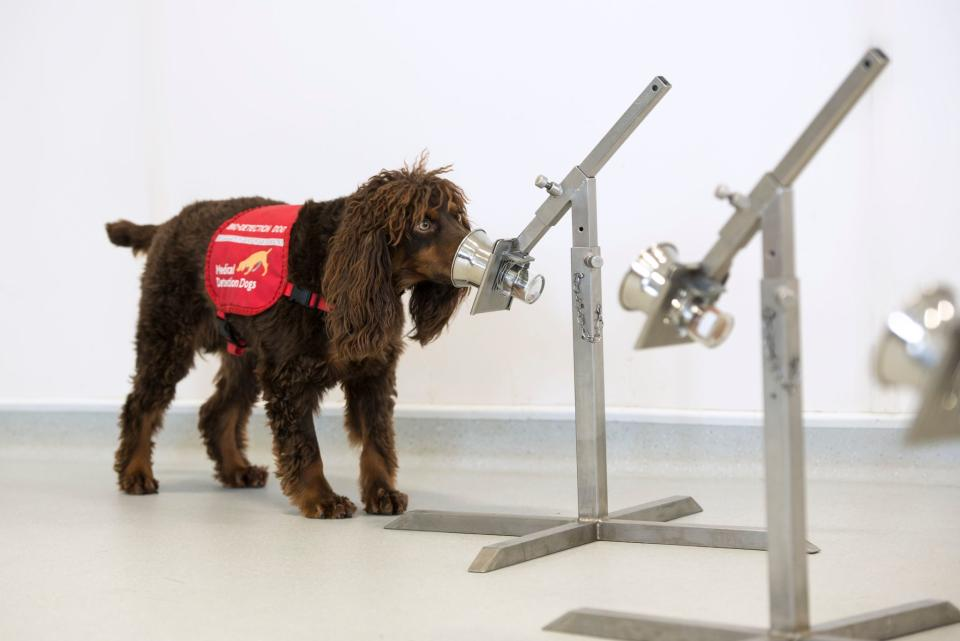 Researchers hope specially trained dogs will be able to sniff out Covid-19 (Bex Arts/MDD)