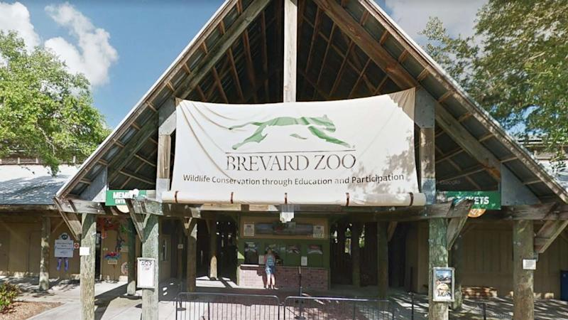 Boy, 1, airlifted to hospital after falling into rhino enclosure at zoo