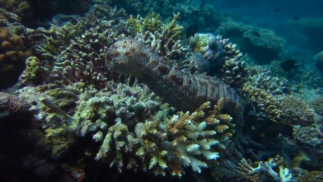 Marine biologists using 3D modelling on Reef
