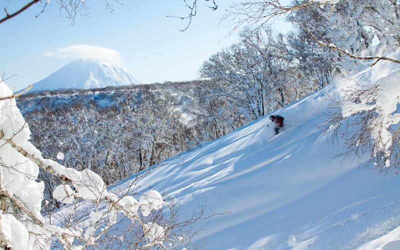 Experience Japan's legendary powder in January 2020