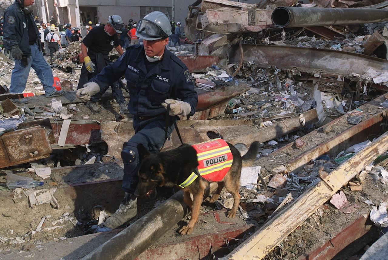 A Sept. 13, 2001, file photo of James Symington and his German shepherd, Trakr, searching through rubble at the World Trade Center tower collapse site in New York, on Sept. 13, 2001, days after the terrorist attacks. Trakr and his master, a retired Canadian police officer who now lives in Los Angeles, were among the first search and rescue teams to arrive at Ground Zero after the attacks. (AP Photo/Stephen Chernin)