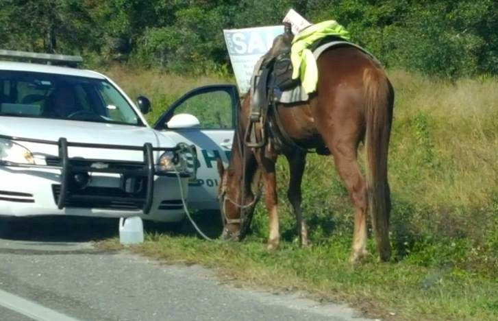 Polk County Sheriff's Office deputies pulled Donna Byrne over as she riding her horse, pictured, on Thursday afternoon.
