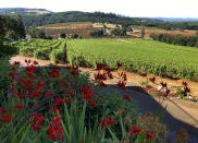 A view of Willamette Valley Vineyards in Turner, Ore. and its rows of pinot noir on Friday, July 9, 2021. Last year was the winery's first experience in the Willamette Valley with wildfires and smoke impact and this year the vineyards were subjected to record heat. (AP Photo/Andrew Selsky)