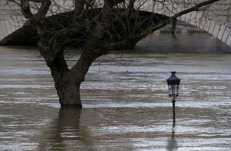 FILE PHOTO: A street lamp and a tree are seen on the flooded banks of the River Seine in Paris