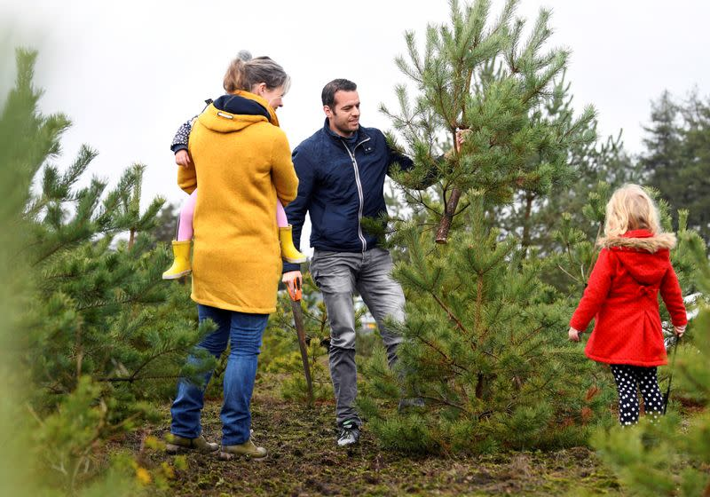 People saw their chosen Christmas tree to take home at The Dutch Hoge Veluwe National Park in Otterlo