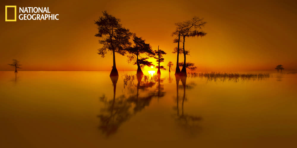 Photograph courtesy Clane Gessel/National Geographic Your Shot Sunrise with cypress trees in the Florida Everglades