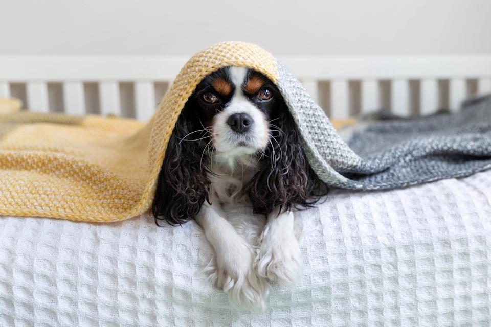 No more trembling pups under the blankets. (Photo: Getty)