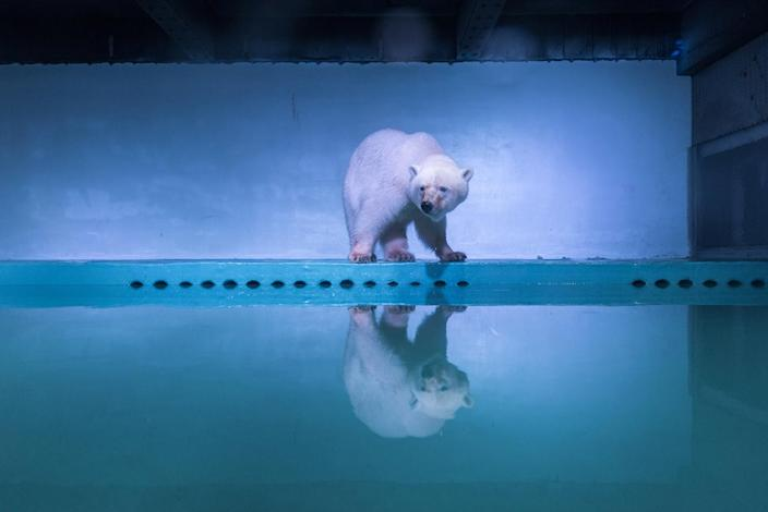 <p>A polar bear is seen at an aquarium in Guangzhou, Guangdong province, China, July 27, 2016. (REUTERS/Stringer) </p>