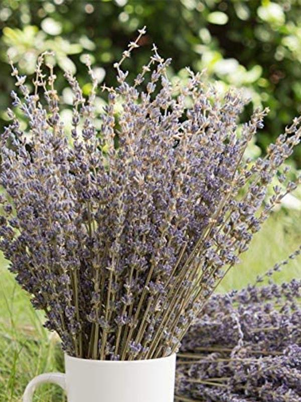 "ICYMI, Amazon has a serious plant shop going on—and we're currently vibing these dried lavender bushes. It's just as sweet as sending your mom a fresh bouquet for Mother's Day, except these will last her months, not weeks. Did we mention they don't need water? $15, Amazon. <a href=""https://www.amazon.com/Timoo-Lavender-Dried-Lavender-Flowers-Decoration-Fragrance/dp/B07T9HL8TN/"" rel=""nofollow noopener"" target=""_blank"" data-ylk=""slk:Get it now!"" class=""link rapid-noclick-resp"">Get it now!</a>"