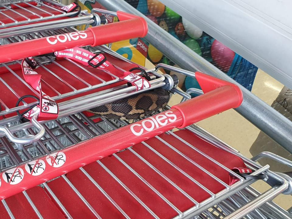 A Coles shopper found a snake snuggled between trolleys at a Brisbane store.