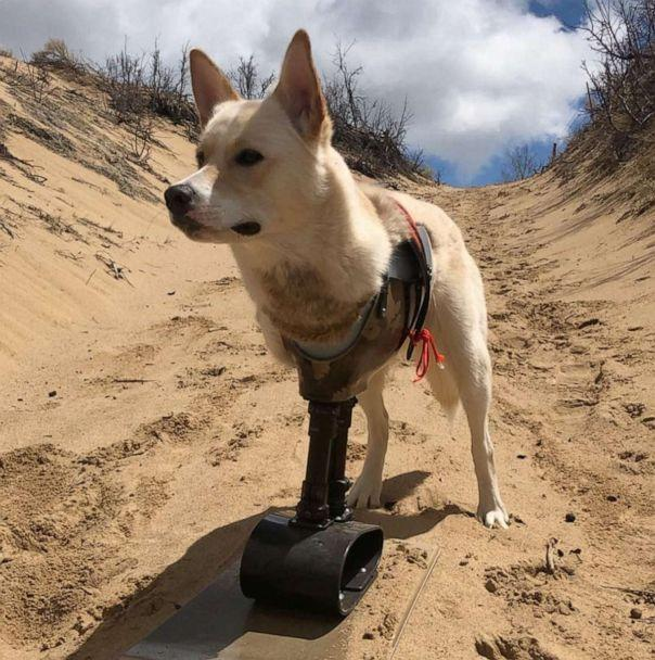 PHOTO: Gus was born with only two legs but he goes on adventures in all terrains thanks to his family and his prosthetics. (Melody Rezzonico)