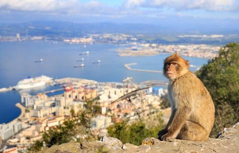 A macaque in Gibraltar - Credit: Getty