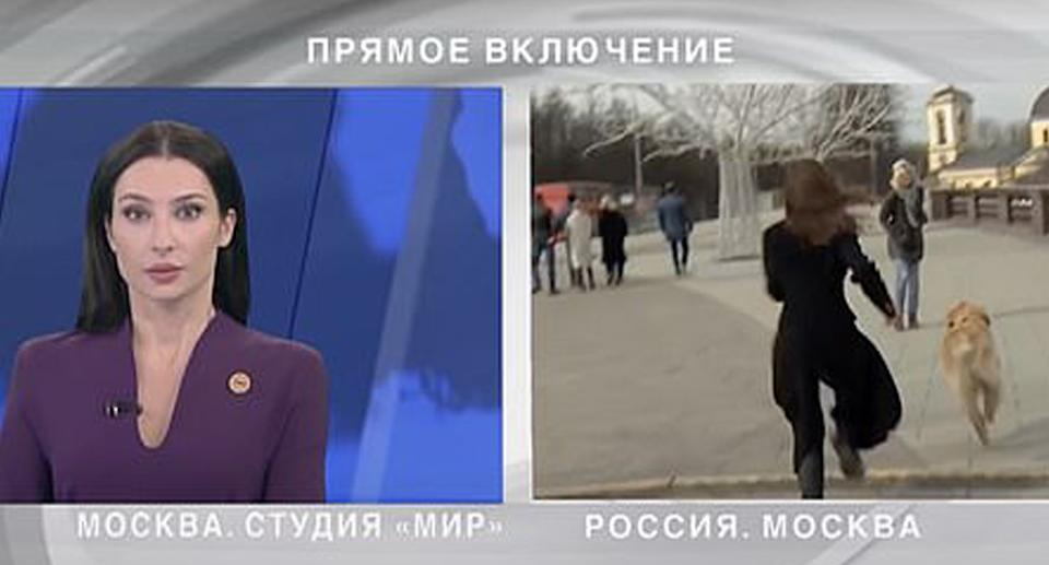 A dog steals a microphone during a live cross on Russian TV