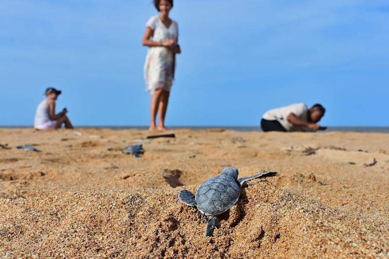 Locals fear a planned coal-fired plant threatens the pristine beauty of Kenya's Lamu archipelago, home to five species of threatened turtles (AFP Photo/TONY KARUMBA)