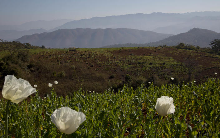 In this Jan 27 photo, flourishing poppy fields spread through hills at Nampatka village, Northern Shan State, Myanmar. Infantry army base and several police posts overlook waves of white and pink poppies in full bloom on both sides of the dusty road leading to Nampakta, blanketing the sloping valleys and jagged peaks as far as the eye can see. (AP Photo/Gemunu Amarasinghe)