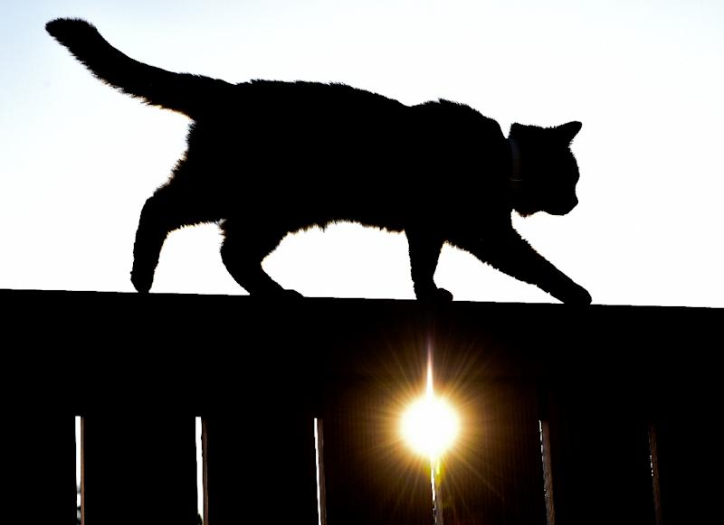 A cat walks on a fence as the sun sets in Sieversdorf, Germany, on June 6, 2014 (AFP Photo/Patrick Pleul)
