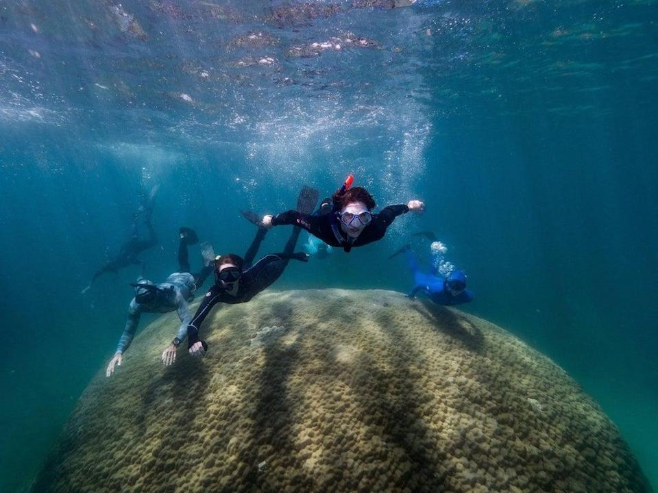 Scientists swimming over the top of the Porites coral at Goolboodi (Woody Spark)