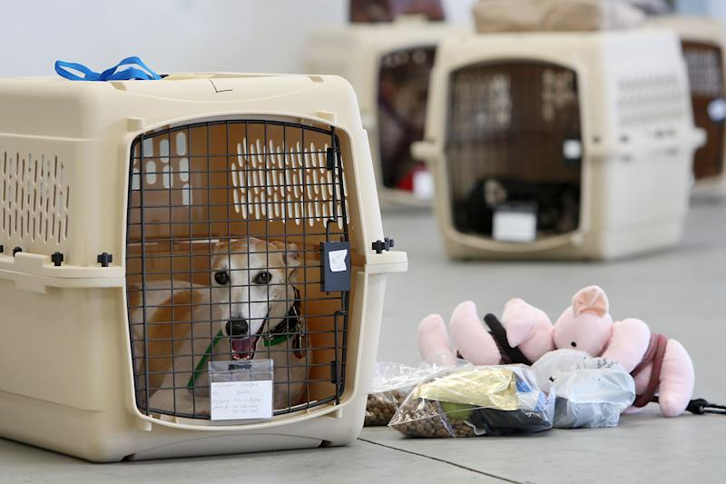 Cost To Board Dog At Kennel