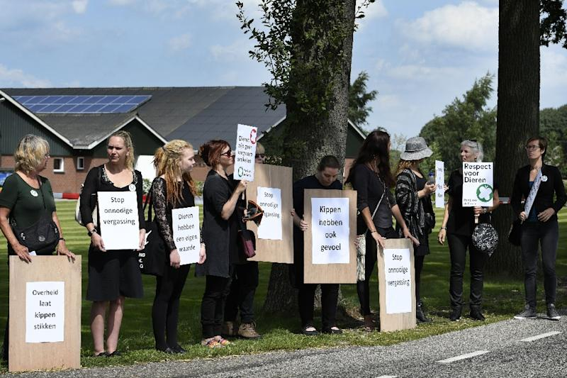 """""""Chickens have feelings too"""": Dutch animal activists wave banners and placards as they stage a protest at a poultry farm in Witteveen"""