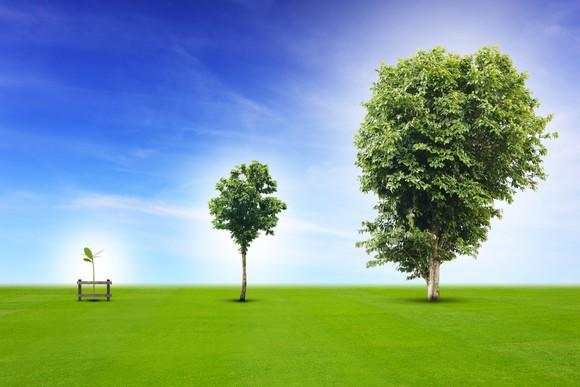 Three trees, getting progressively bigger, from left to right.