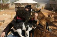 Manager of Ernesto's sanctuary for cats, Mohamad Wattar, plays with cats in Idlib