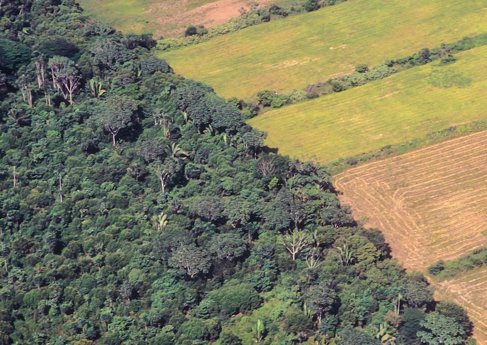 Soya bean plantations next to the original forest of the Amazon (Getty Images/iStockphoto)