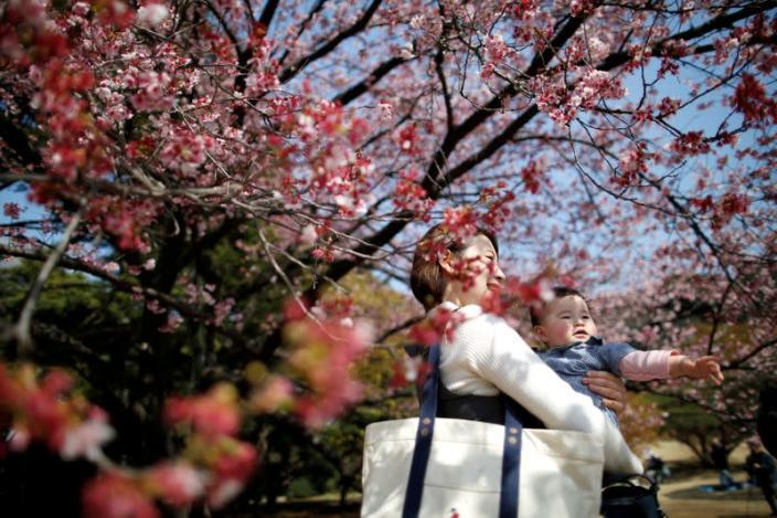 FILE PHOTO: A seven-month-old baby and her mother look at early flowering Kanzakura cherry blossoms in full bloom at the Shinjuku Gyoen National Garden in Tokyo
