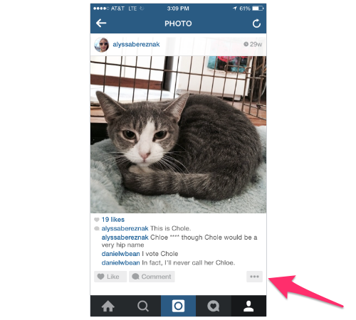 Best Hashtags For Cats On Instagram