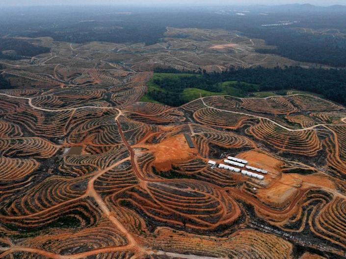 <p>Tropical deforestation accounts for 8% of human-caused carbon emissions</p>AFP