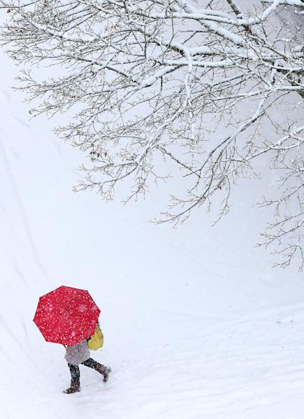 A pedestrian passes beneath a snow-covered tree on Oak Street in Eugene, Ore. on Friday, Dec. 6, 2013. (AP Photo/The Register-Guard, Brian Davies)