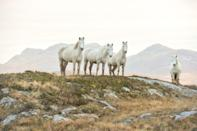 <p>Wild horses in County Galway, Ireland // January 3, 2017</p>