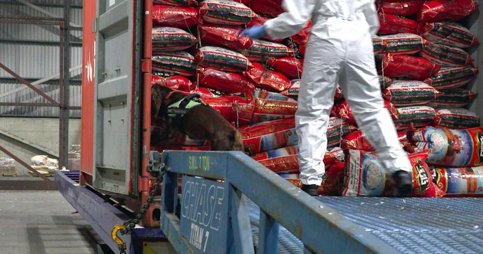 Undated handout photo issued by the National Crime Agency (NCA) showing an officer unloading bags of rice which contained a �21 million haul of heroin that was hidden inside and which has been seized from a container ship at the port of Felixstowe.