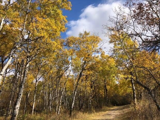 Many Saskatchewan communities recorded their hottest-ever temperatures for September 18 this year. (Emily Pasiuk/CBC - image credit)