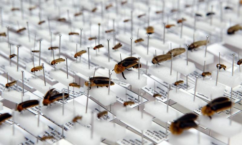 Different species of firefly on display at the Forest Research Institute in Kuala Lumpur.