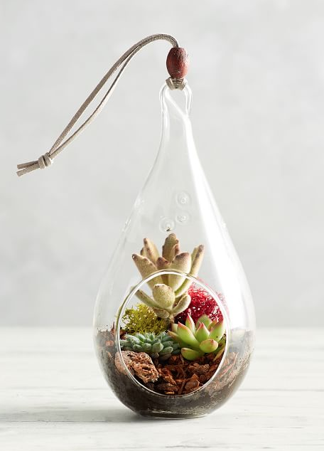 """<p>Given the air plant's lack of roots, a hanging glass planter gives you a 360-degree view of the diminutive yet intricate plant.</p><p><a class=""""body-btn-link"""" href=""""https://go.redirectingat.com?id=74968X1596630&url=https%3A%2F%2Fwww.potterybarn.com%2Fproducts%2Flive-hanging-teardrop-terrarium%2F&sref=https%3A%2F%2Fwww.elledecor.com%2Fdesign-decorate%2Froom-ideas%2Fg26873290%2Fbest-air-plants%2F"""" target=""""_blank"""">SHOP THE LOOK</a><br><em>Hanging Teardrop Terrarium, $50</em></p>"""
