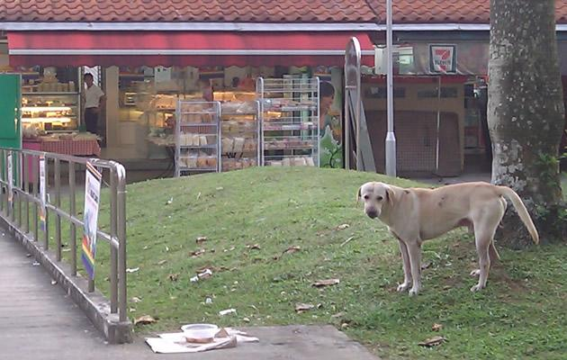 'Hachiko' of Jurong East returns to await his master (Yahoo! file photo)