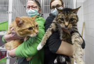 Urte Inkmann, left,, head veterinarian, and animal caretaker Parthena Topouzoglou hold the cats Lolek and Bolek after the formerly Corona-positive cats were allowed to leave the shelter's isolation ward in Hamburg, Germany, Saturday, Feb.27, 2021. The two neutered males, now recovered, have now moved to the shelter's placement area and are looking for a new home. The animals had belonged to a Hamburg woman who died after a corona virus infection. (Markus Scholz/dpa via AP)