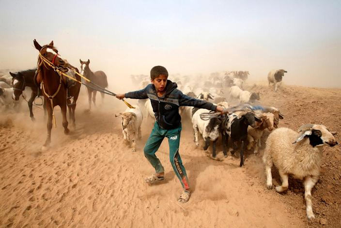 <p>A displaced Iraqi boy leads his animals to safety after escaping from Islamic State controlled village of Abu Jarboa during clashes with IS militants near Mosul, Iraq November 1, 2016. (REUTERS/Ahmed Jadallah) </p>