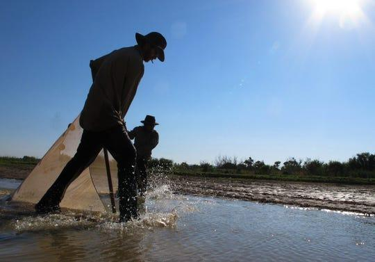 U.S. Fish and Wildlife Service biologists search for endangered Rio Grande silvery minnows in isolated pools in the riverbed near Socorro, New Mexico, in 2013.