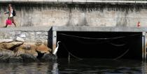 A bird sits next to a sewage canal at the Guanabara Bay in Rio de Janeiro March 12, 2014. REUTERS/Sergio Moraes