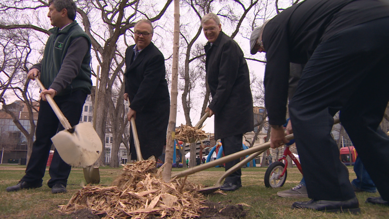 New trees planted in Regina's Victoria Park