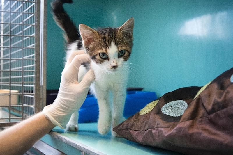 At least 3,000 cats and kittens were used in research since 1982, according to the White Coat Waste Project
