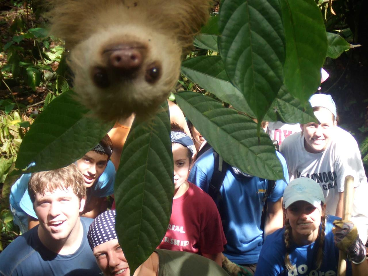 moment a sloth gatecrashed a groups holiday snap in the jungle. The group of youngsters on an International Student Volunteers expedition from all over the world had been helping cut paths in the dense woodland on Costa Rica to allow researchers to get around. And after completing their back-breaking charity work, they decided to have a group picture taken as a keep sake. But what they didn't expect was this inquisitive sloth slowly lowering himself down into the frame as the group smiled for the camera. Manuel Ramirez, who is an anthropologist and tour guide for International student volunteers , had decided to take the snap, but he was not aware that a fame hungry sloth was waiting above (Caters)