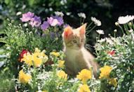 <p>The definition of the perfect spring day is frolicking in a field of wildflowers with this little cat. </p>