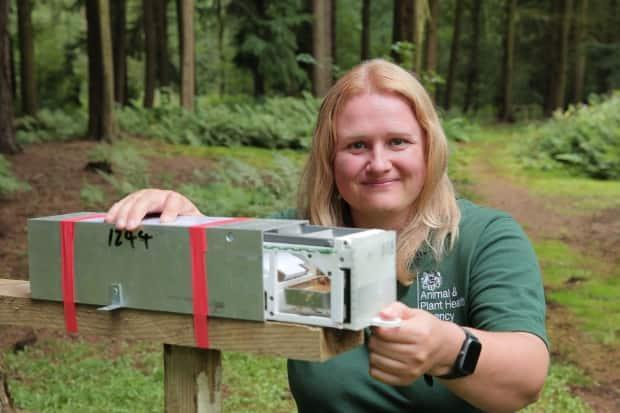 Sarah Beatham, a wildlife ecologist for the National Wildlife Management Centre at the Animal and Plant Health Agency, holds a trap that is designed to lure grey squirrels with a mix of hazelnut butter and contraceptive gel.  (Adrian Di Virgilio/CBC - image credit)