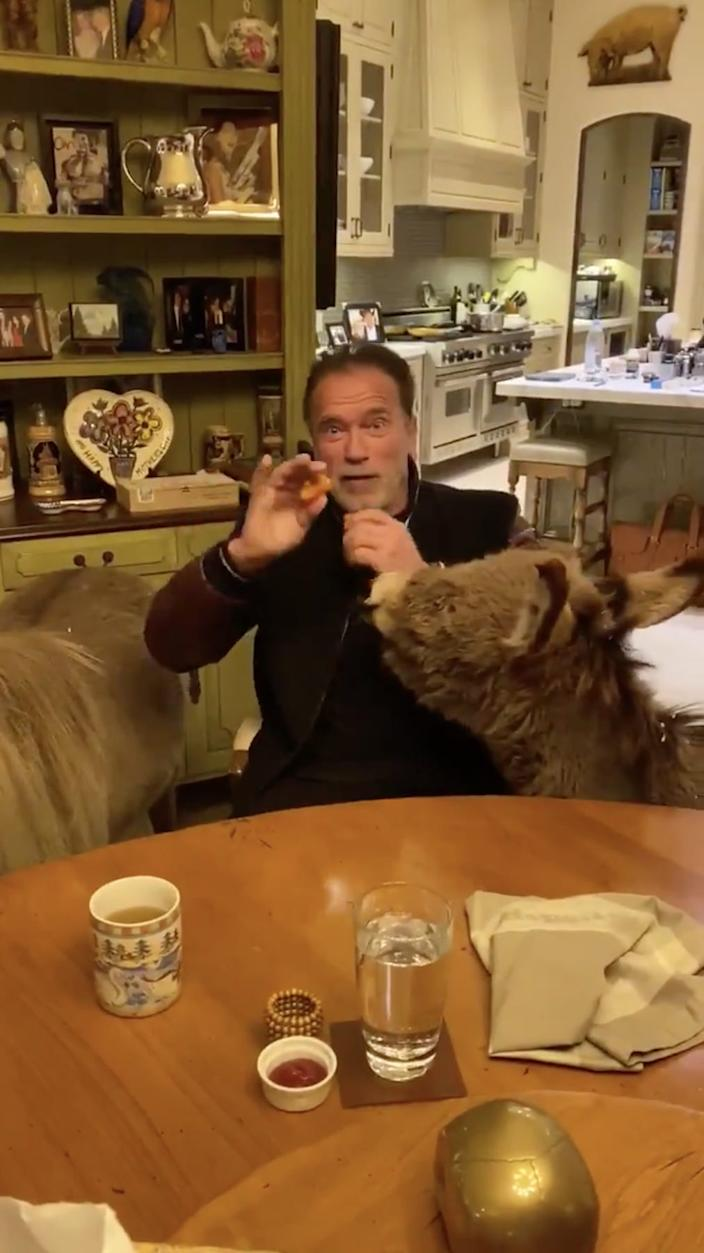 Arnold Schwarzenegger fed donkeys in his home.
